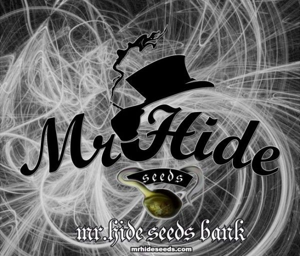 Mr. Hide Seeds Bank