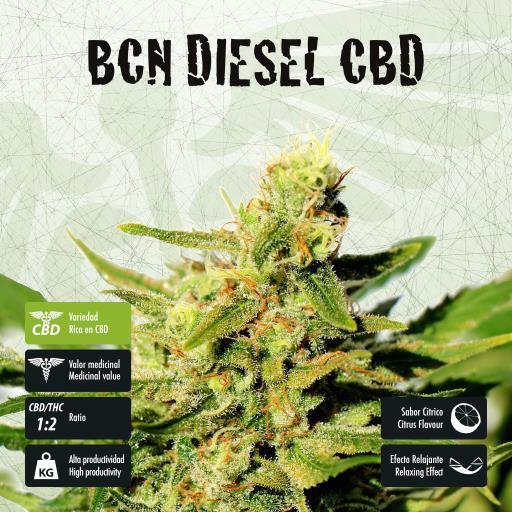 facebook-variedad-bcn-diesel-cbd
