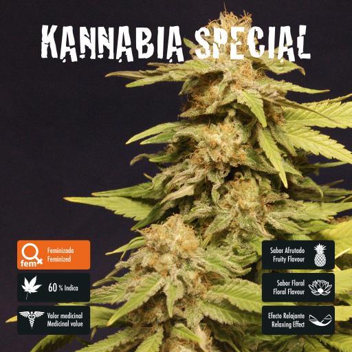 facebook-variedad-kannabia-special
