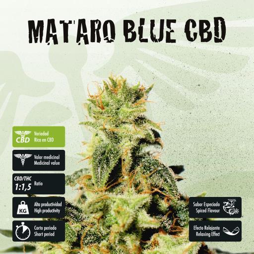facebook-variedad-mataro-blue-cbd