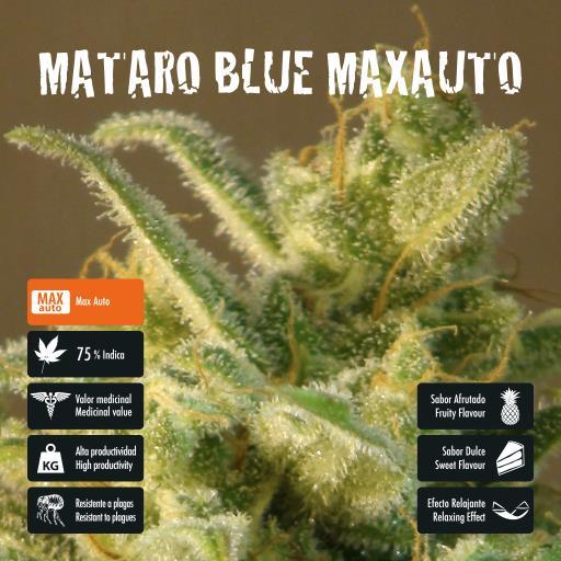 facebook-variedad-mataro-blue-max