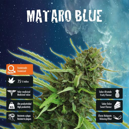 facebook-variedad-mataro-blue