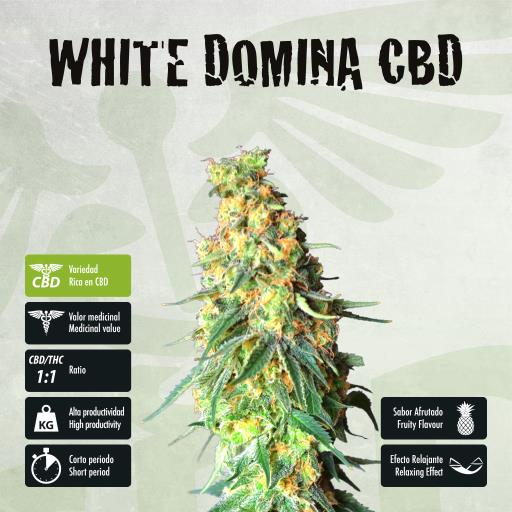 facebook-variedad-white-domina-cbd