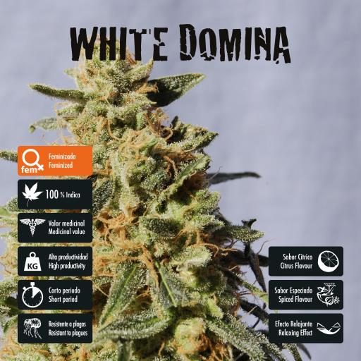 facebook-variedad-white-domina