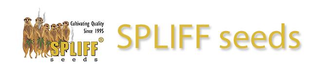 slider_sppliff_seeds_seedjourney_3
