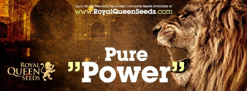 Royal Queen Seed Store