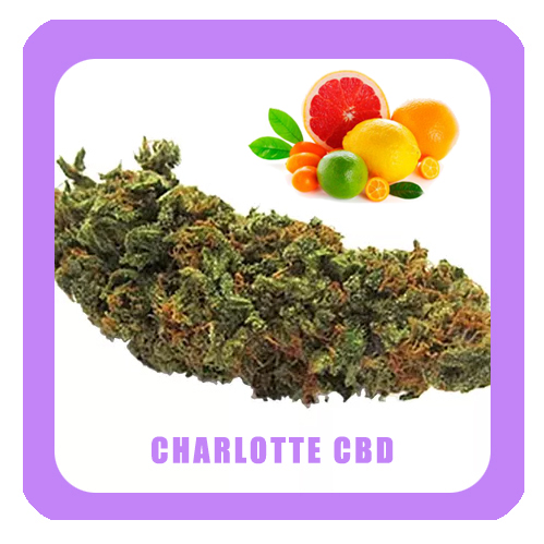 Charlotte-CBD2-1