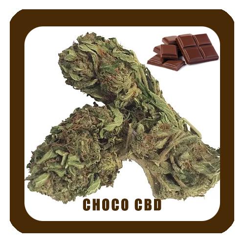 Choco-CBD-NOM5-1