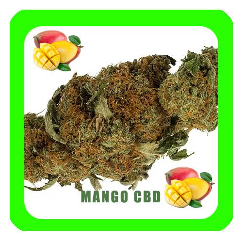 Mango-CBD6-1