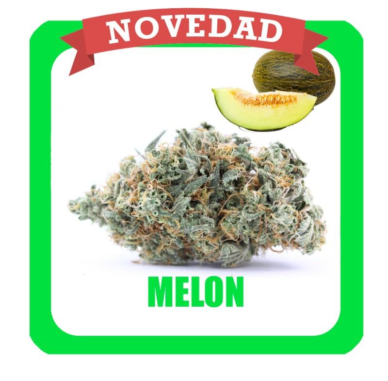 melon-novedad